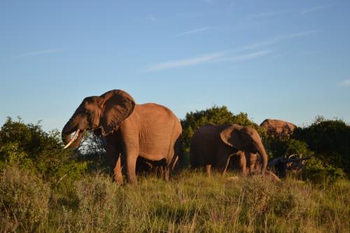Grupo de elefantes no Addo, há alguns metros do nosso carro