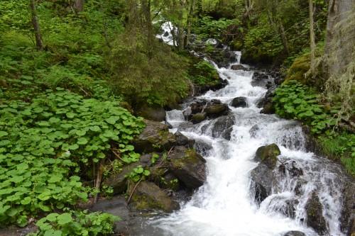 Foto clássica de trilha, a água tava deliciosa