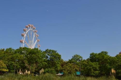 Roda gigante saindo do meio do parque do rio Turia