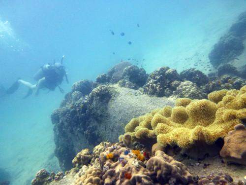 Tinham corais mais coloridos e maiores, juro :-)