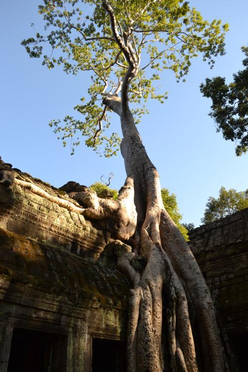 Todo mundo que visita Angkor tem uma foto ali, então...