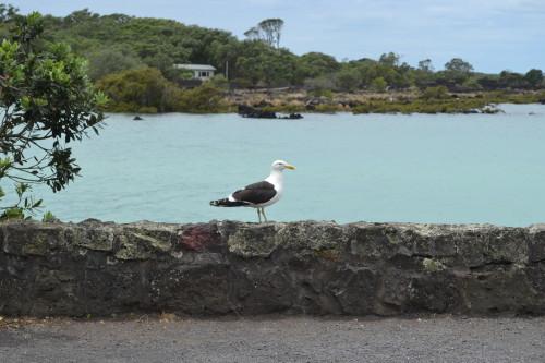 ...e uma ave em uma ilha choquito seria assim...