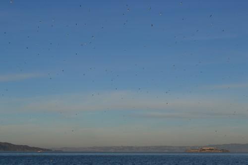 Não fomos em Alcatraz, mas as gaivotas ficaram boas na vista